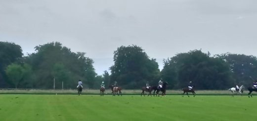 presidents cup polo at the park