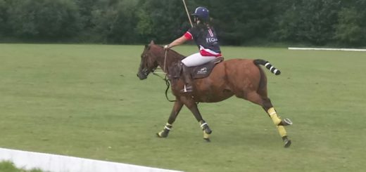 polo (29th-30th july) on the ballyhenry estate