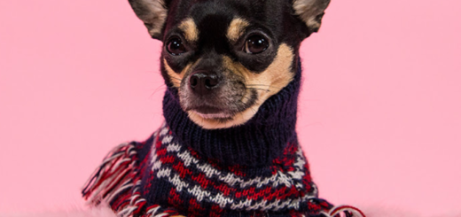 missguided – more bark for your buck