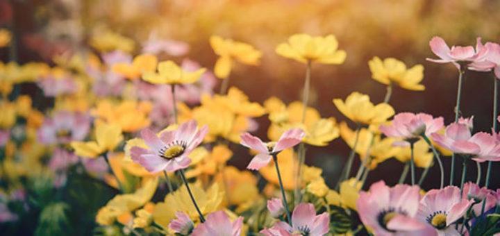 galwaynow magazine – transform your garden into a summer sanctuary