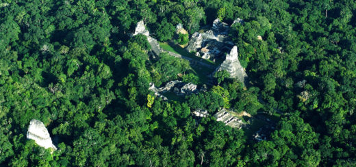 artnet News - How Lasers Are Utterly Transforming Our Understanding of the Ancient Maya, Bringing Their Whole Civilization Back to Light