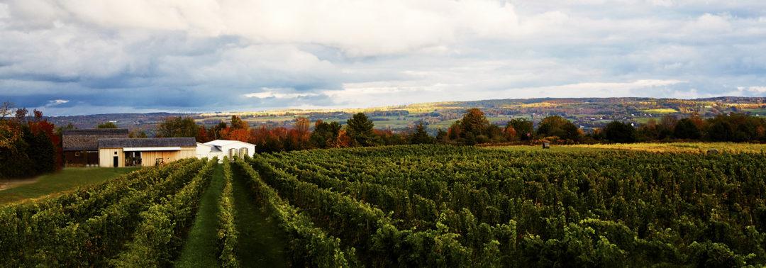 Hermann Weimer Wine Pynck, 1-21 vineyard.jpg