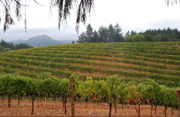 4 vines winery calif wine pynck 1-21.jpg